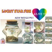 Wholesale Lucky Star Fish Lucky Star Fish from china suppliers
