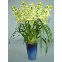 Wholesale Information and cultivation management of Cymbidium from china suppliers