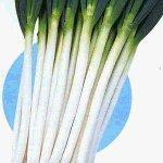 Wholesale Scallion Seeds from china suppliers