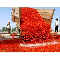 Wholesale Tomato paste in drum packing Tomato paste in drum packing Tomatopasteindrumpacking from china suppliers