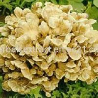 Wholesale Maitake Mushroom Extract,Grifola Frondosa,Polysaccharide 10% from china suppliers