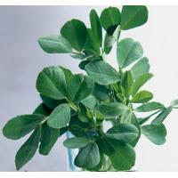 Wholesale Proportional Extracts :Fenugreek  Extract from china suppliers