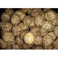 Wholesale Mushroom from china suppliers