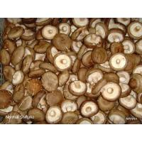 Wholesale Fresh Mushroom TC0101-02 from china suppliers