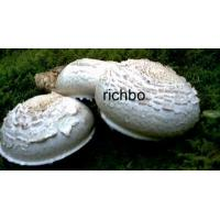 Wholesale Canned Fruits Canned Mushroom from china suppliers