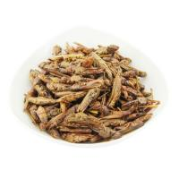 Wholesale Cat Food Dried Grasshopper from china suppliers