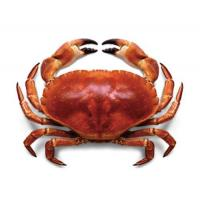 Wholesale Irish Gold Crab from china suppliers