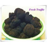 Wholesale Sell Fresh chinese black truffle from china suppliers