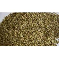 Wholesale Fennel Seeds from china suppliers