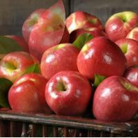 Wholesale PINK LADY APPLES NO.30 deliver gift hamper to shenzhen from china suppliers