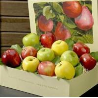 Wholesale APPLE MEDLEY NO.39 deliver gift hamper to shenzhen from china suppliers