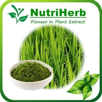 Quality Natural Barley Grass Powder,Barley Grass Fruit Powder,Green barley powder,Barley green powder for sale