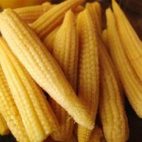 Wholesale All About Cans of Big Yellow Corn Kernels for Sale from china suppliers