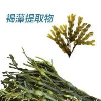 Wholesale Brown seaweed extract from china suppliers