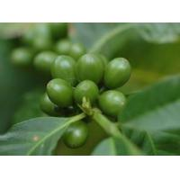 Wholesale Green Coffee Bean Extract from china suppliers