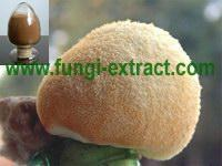 Wholesale Hericium Erinaceus Extra from china suppliers