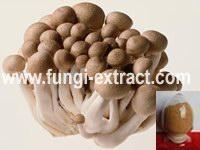 Wholesale Agaricus Blazei Extract from china suppliers