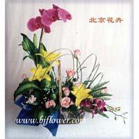 Wholesale Butterfly orchid, yellow Lily Butterfly orchid, yellow Lily from china suppliers