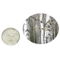 100% natural white birch bark extract betulin 98% powder