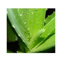 Wholesale Aloe powder from china suppliers