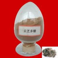 Wholesale Coriolus versicolor Polysaccharide/Coriolus versicolor Extract from china suppliers