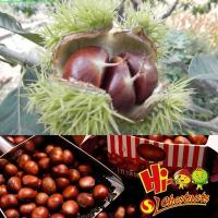 Wholesale Wholesale Chestnut Fresh Chinese chestnut from china suppliers