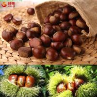 Wholesale Organic fresh chestnuts from china suppliers