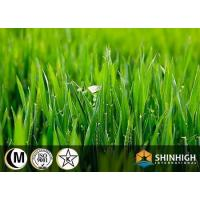 Wholesale Organic conventional food Barley grass powder from china suppliers