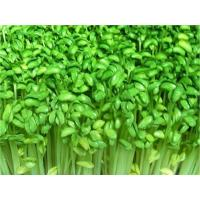 Wholesale Bean sprouts germination production line from china suppliers