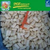 Wholesale Frozen vegetable IQF cut baby corn L 2-4cm dia 8-22mm from china suppliers