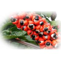 Wholesale Guarana Extract from china suppliers