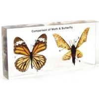 Wholesale Animal Comparison 1504 Comparison of Moth & Butterfly from china suppliers