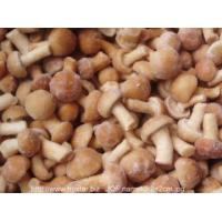 Wholesale IQF Frozen Mushrooms IQF nameko mushroom from china suppliers