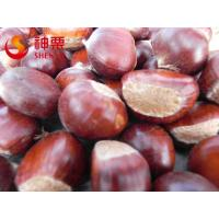 Wholesale New Crop Fresh Chestnut from china suppliers
