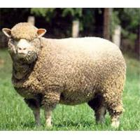Wholesale Merino from china suppliers
