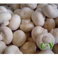 Wholesale IQF MUSHROOMS Product No.: C.Y.M.01 from china suppliers