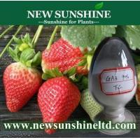 Wholesale High effect plant growth hormone for strawberry Gibberellin GA3 from china suppliers