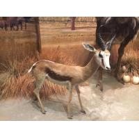 Wholesale Animal Specimens Statue Of Silicone from china suppliers