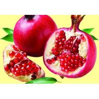 Buy cheap Pomegranate Extract from wholesalers