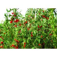 Buy cheap Wolfberry Juice Powder from wholesalers