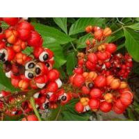Wholesale PRODUCTS Guarana extract from china suppliers