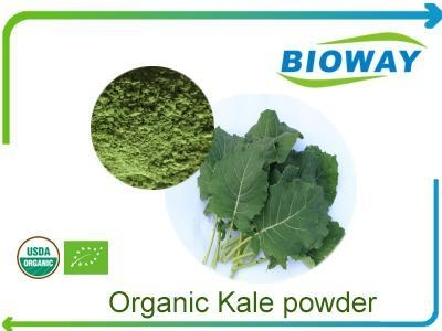Quality Organic Kale Powder for sale
