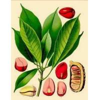 Wholesale Kola Nut Extract-Theobromine from china suppliers