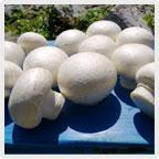 Wholesale Fresh Mushroom from china suppliers