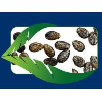 Wholesale Seeds from china suppliers