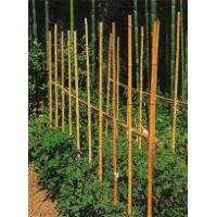 Bamboo cane fences quality bamboo cane fences for sale for Uses for bamboo canes