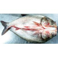 Wholesale Sliver Carp from china suppliers