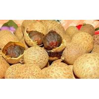 Wholesale Good supply of green food storage dry longan system-level from china suppliers
