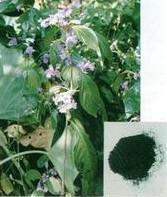Wholesale Natural Indigo P.E from china suppliers