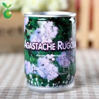 Wholesale Agastache Rugosus/Tin Can Manufacturing Plants/Mini Garden Canned Plants/Novelly Gifts from china suppliers